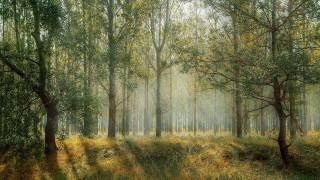 Debata o nowym planie urządzania lasu