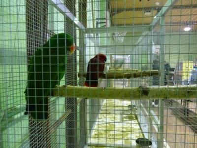 Wystawa ptaków egzotycznych pod patronatem Wójta Gminy Tworóg-fotorelacja
